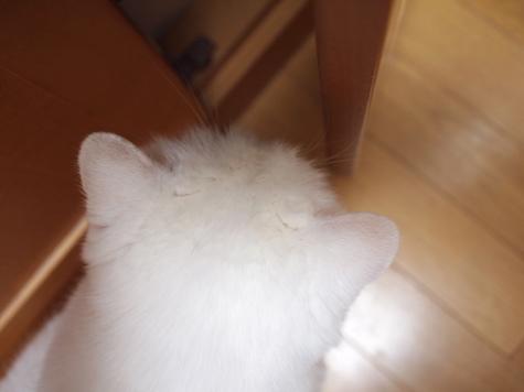 P7279261urabanashi.jpg