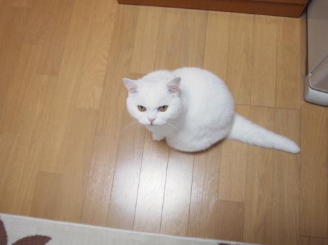 P7279297urabanashi.jpg