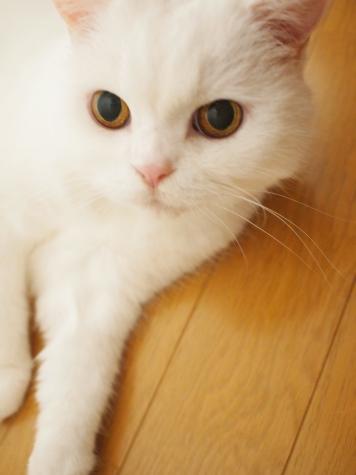 P7299337urabanashi.jpg
