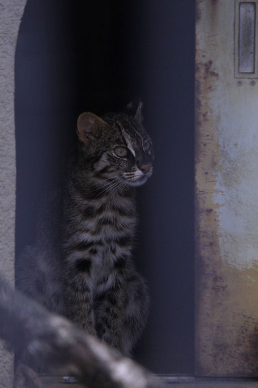'13.8.10 leopard cat 5705