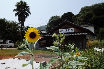 SummerDayOhshima02.jpg