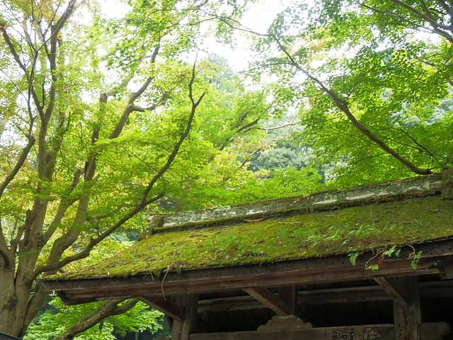室生寺_苔むす屋根