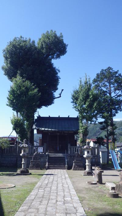熊野神社とカシの木