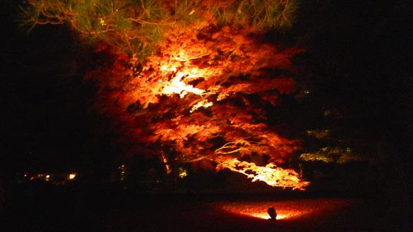 六義園の紅葉ライトアップ 1