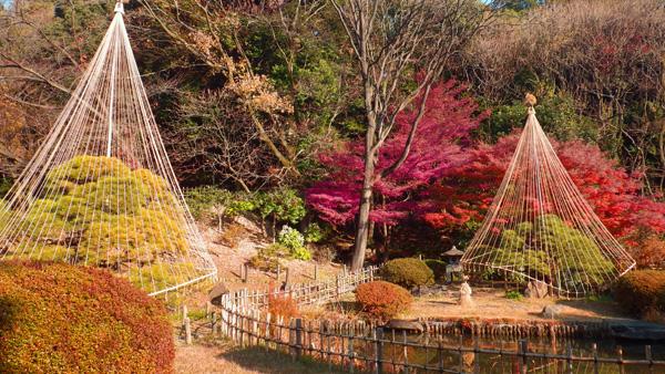 新江戸川公園の紅葉
