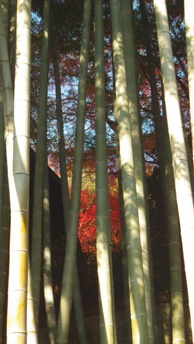 芭蕉庵 竹とその向こうの紅葉