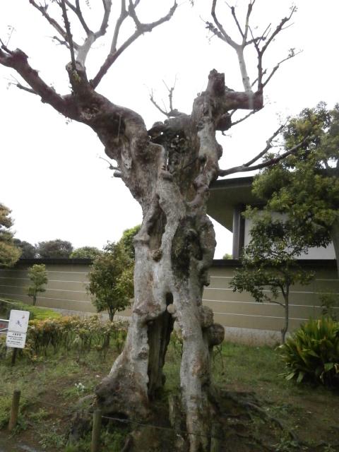 生きる樹2