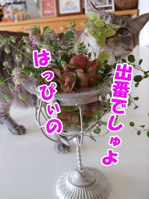 DSCF4367.jpg