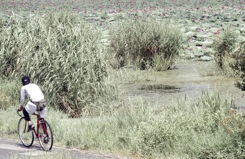 bicycle_hasu_13_7_23.jpg