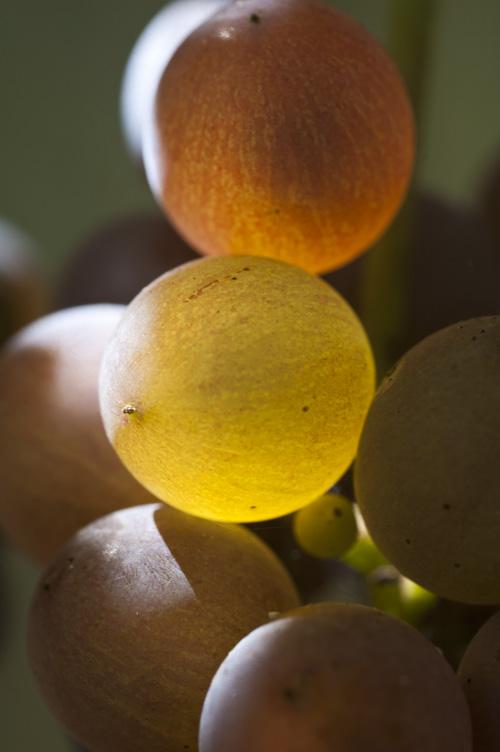 grape13_9_9_2.jpg