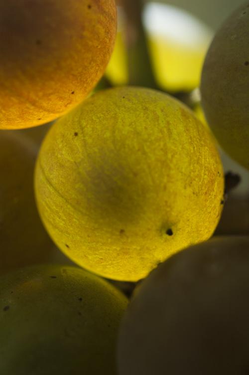 grape13_9_9_3.jpg