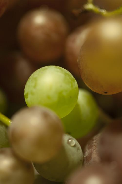 grape13_9_9_7.jpg