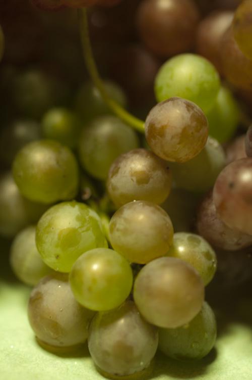 grape13_9_9_8.jpg