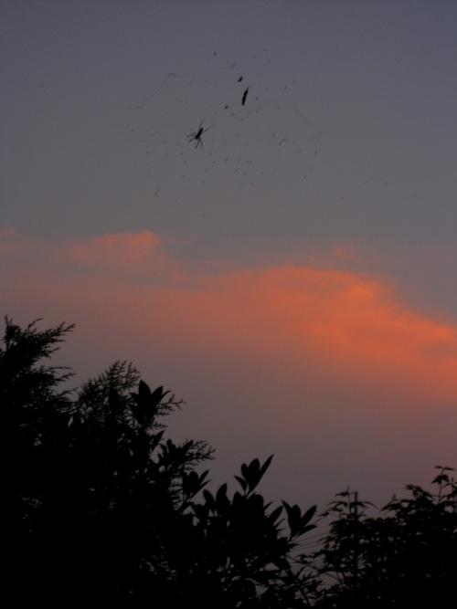 sunset_13_9_25.jpg