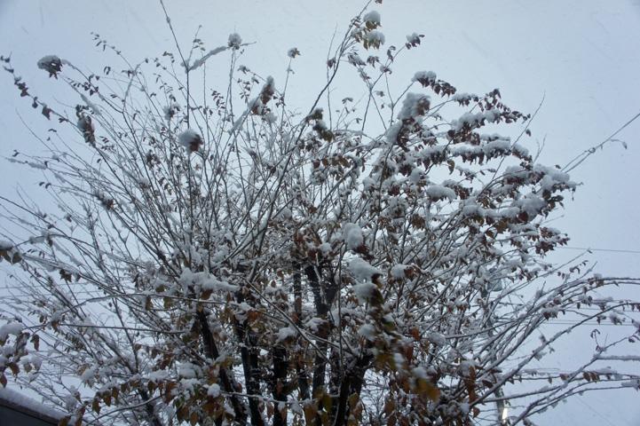 去年の初雪