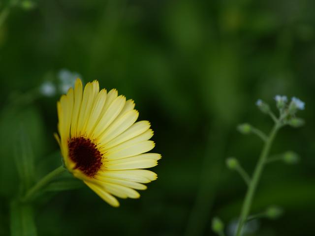 黄色い花をアンダーで