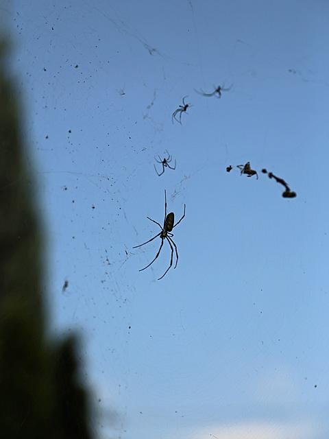 クモの一族