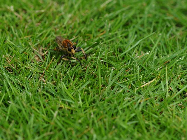 芝生に昆虫