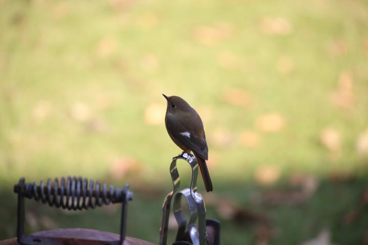 悩める小鳥
