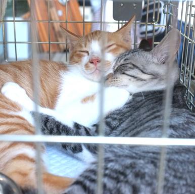 暑い中抱き合って寝ている二人!皆さん写真撮影してました