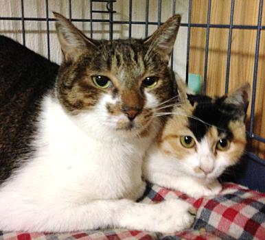 新顔の三毛猫ミリイちゃん(右)もビリーくん(左)が大好き
