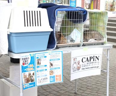 他の保護団体からも沢山のかわいい猫さんが参加!