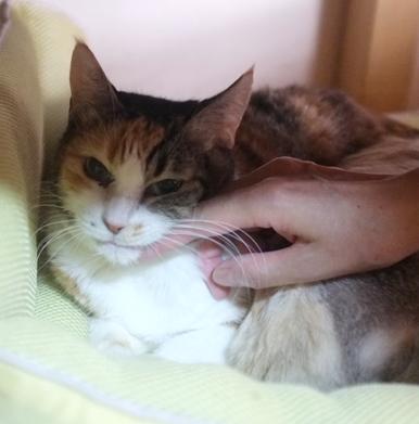 手で撫でてもおとなしいきいちゃん これは奇跡です