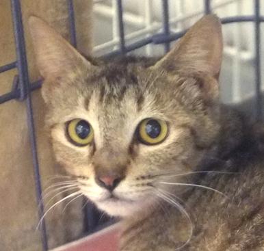 ママ猫はなかなかの美人!マリホちゃんという名前にしました
