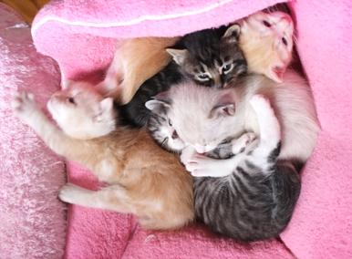 アン、ドゥ、トロワ、キャトル、サンクの仔猫たち