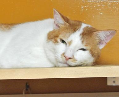 他の猫達にご飯を取られて、いつもお腹を空かせているニャン治朗くん