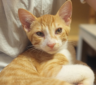 ボクはニャンキー まだ子猫でかわいいよ!