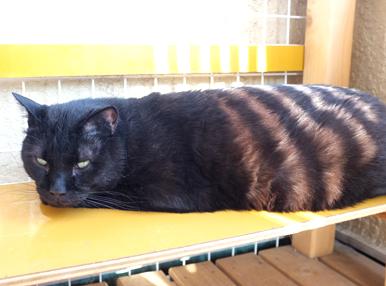 黒猫ユニクロくんがキジトラユニクロくんに?