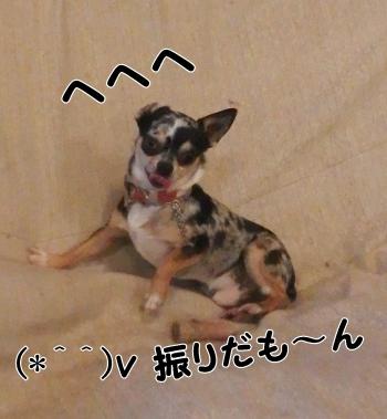 PC010061.jpg