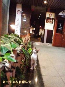 飲食店のそばでよく見かける子猫