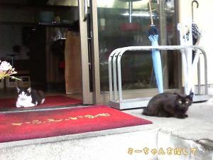 軒先に当たり前のように座っている猫