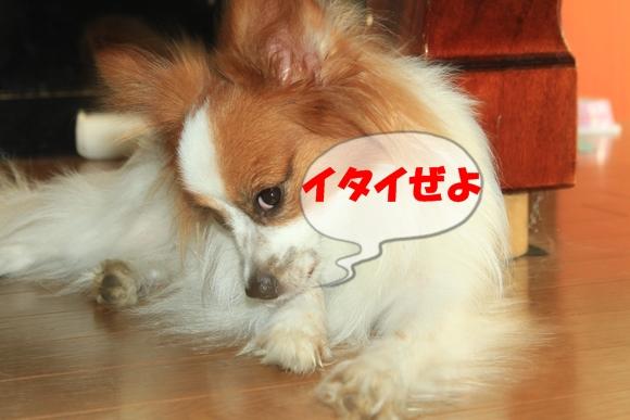7_2013092514511004c.jpg