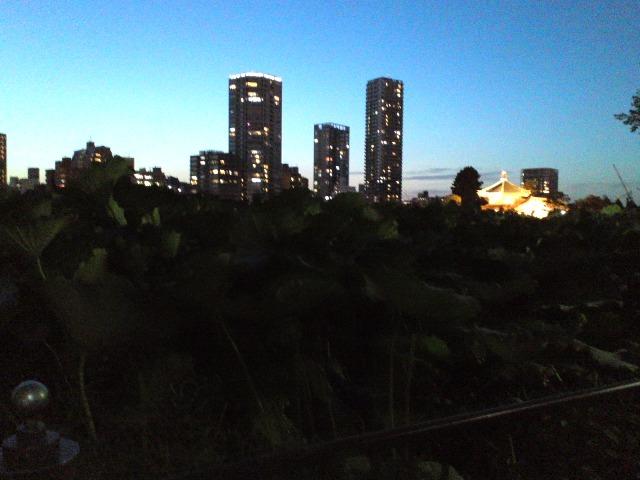 Shinobazu0927W3.jpg