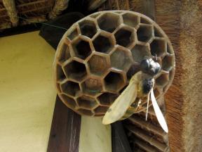 蜂の巣にとまるハチ