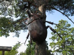 巨大カブトムシ!