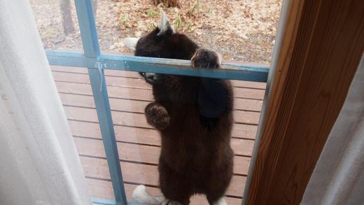 マミちゃん窓に登る