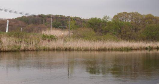 美々川の親水公園
