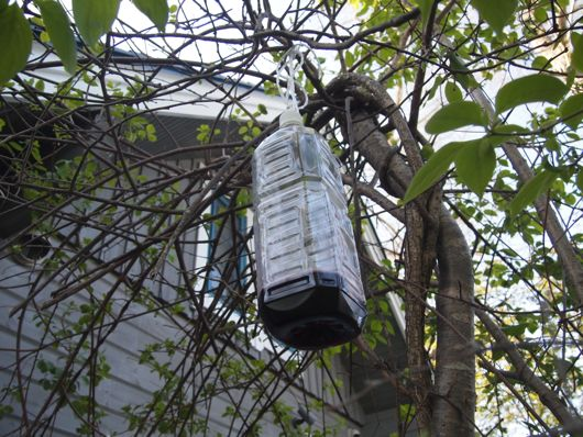 蜂トラップを吊す