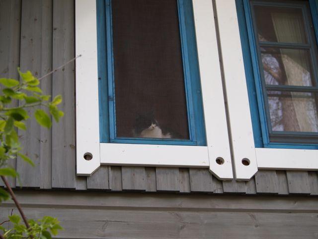 二階の窓から