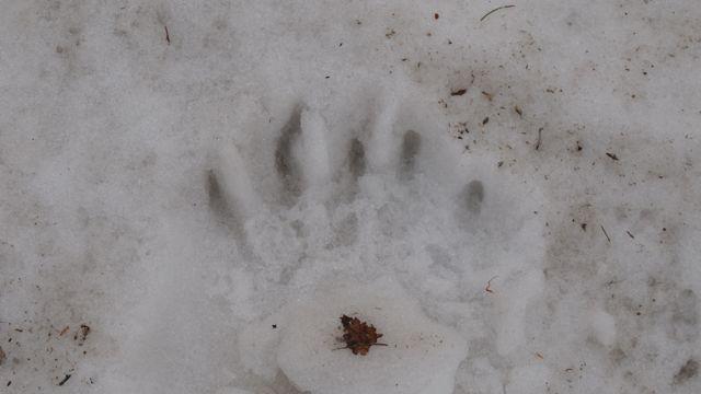 熊の足跡2