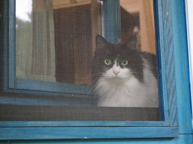 窓からクークー