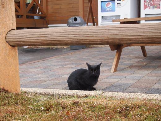 モーラップの猫