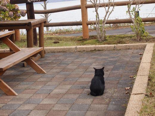 支笏湖の猫
