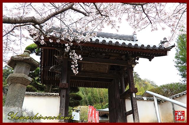 s-20130331-大楽寺0004