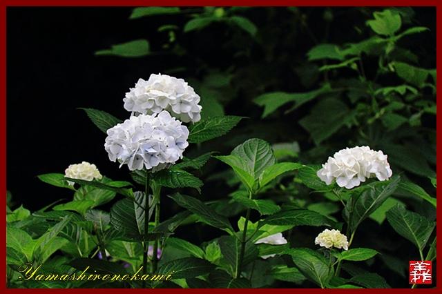s-20130622-杉岳山大聖寺0051