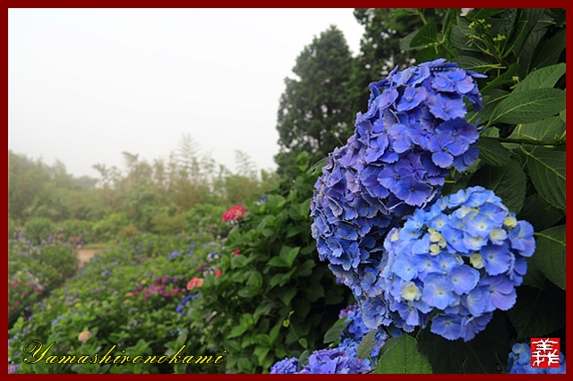 s-20130622-杉岳山大聖寺0020
